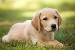 5 Signs of Joint Pain in Dogs and the #1 Treatment Option